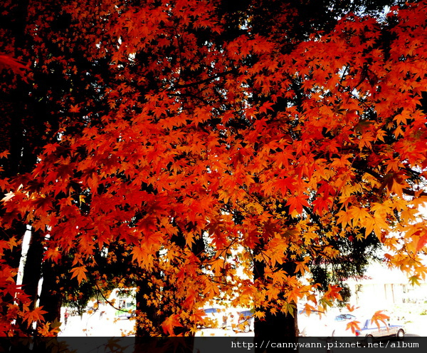 福壽山農場 ~楓紅層層