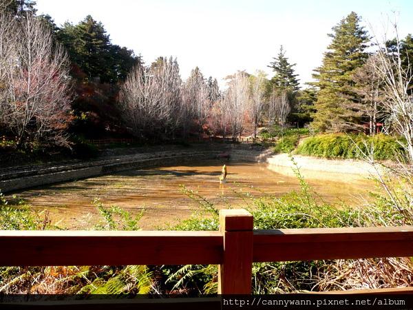 福壽山農場鴛鴦湖