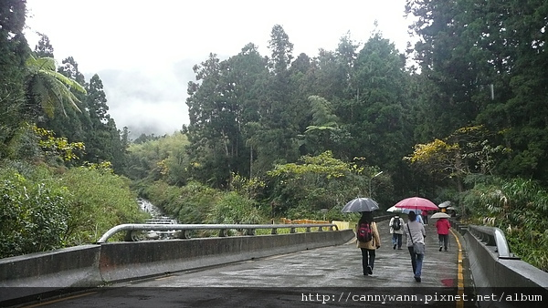 寒冬雨中的溪頭.JPG