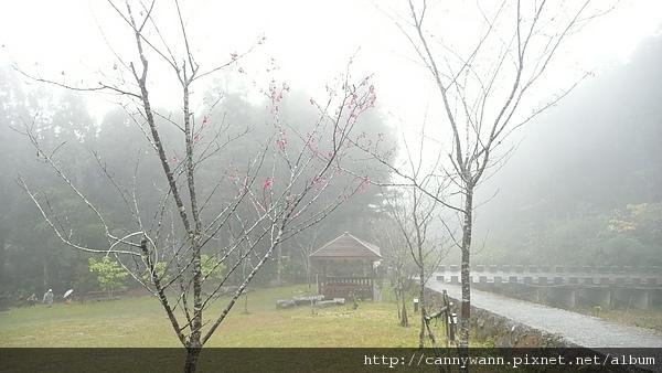 寒冬雨中的溪頭 (9).JPG