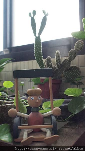有趣的仙人掌~長了新芽