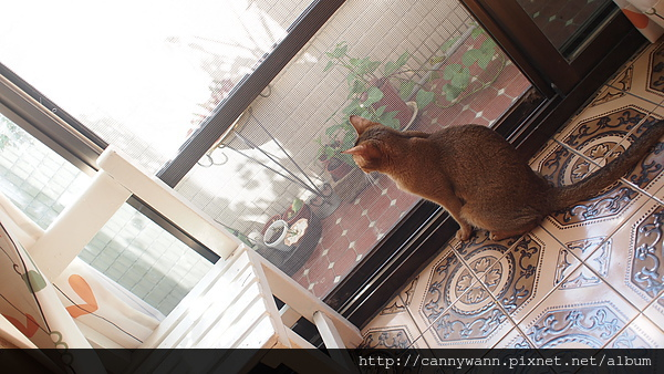 午寐的貓咪.JPG