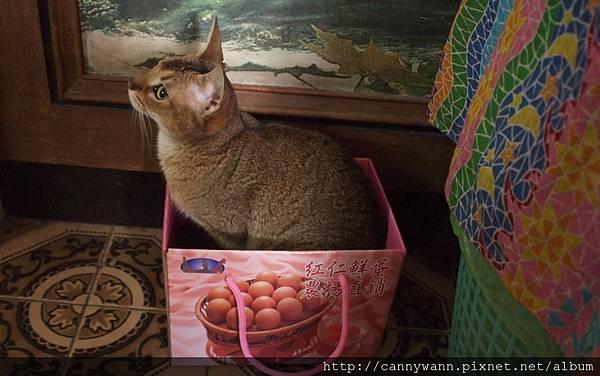 箱子裡的貓咪