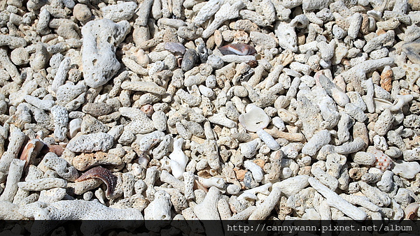 碎珊瑚沙灘.jpg