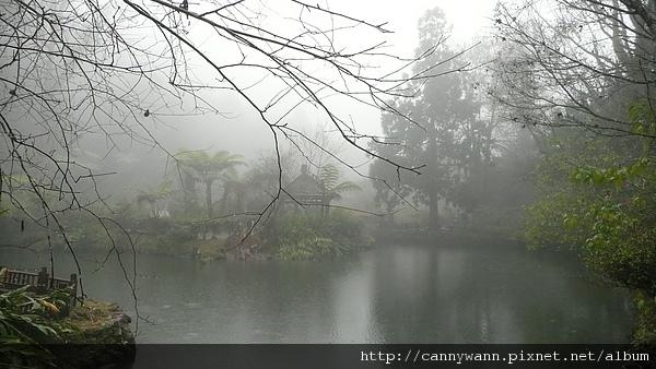 寒冬雨中的溪頭 (19).JPG