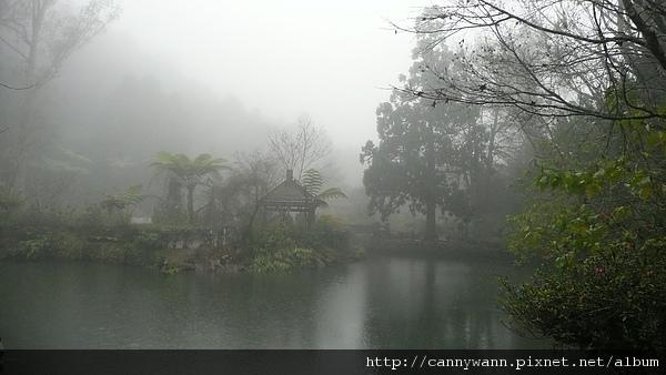 寒冬雨中的溪頭 (18).JPG