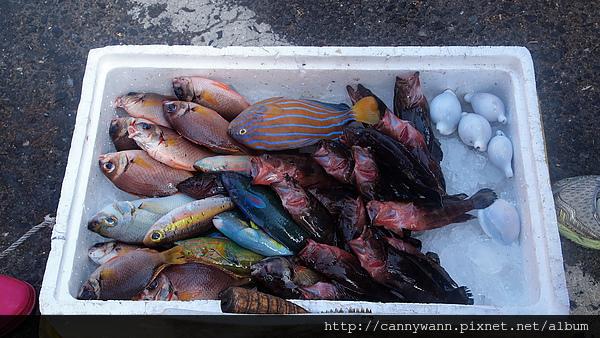 澎湖市場~魚.jpg