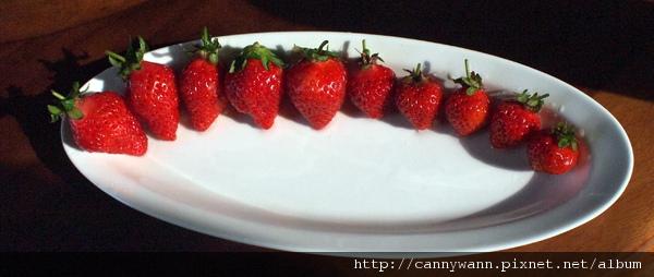 紅豔的草莓
