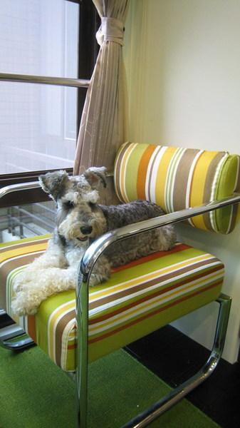 躺在椅子上心理慶祝就好了~