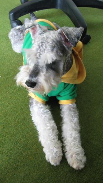 另一件是綠黃巴西運動風的帽T