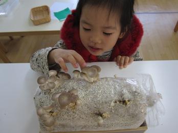 孩子們新奇的看著新長成的香菇~~