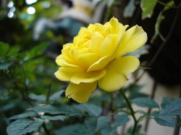 家裡種的花.JPG