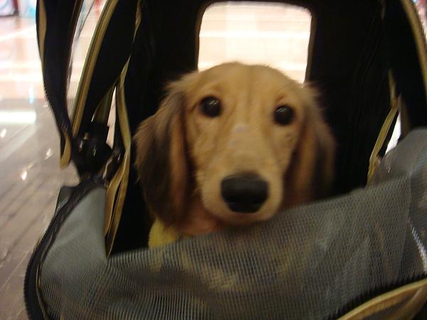 寶貝兒子在推車車裡5.JPG