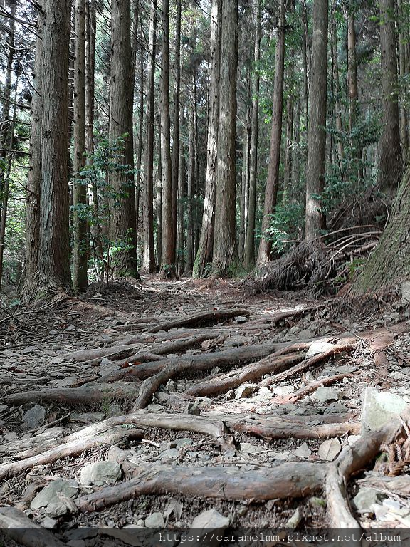 13 東洗水山登山步道.jpg