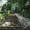 12 油桐花步道.jpg
