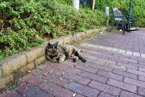 島上貓咪1號