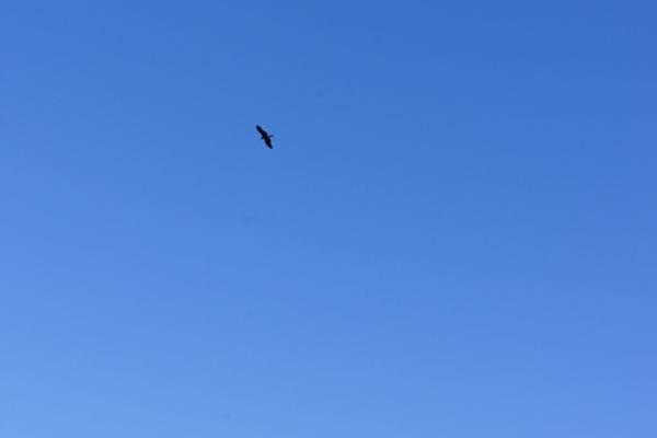 老鷹很遠很難拍
