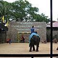 大象表演踢足球
