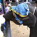 這是隻可愛的小象喔