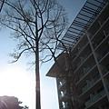 飯店前有2棵樹,MARK上就有畫出這兩棵樹