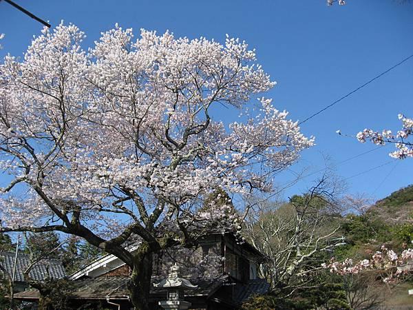 2011kyoto 097.JPG