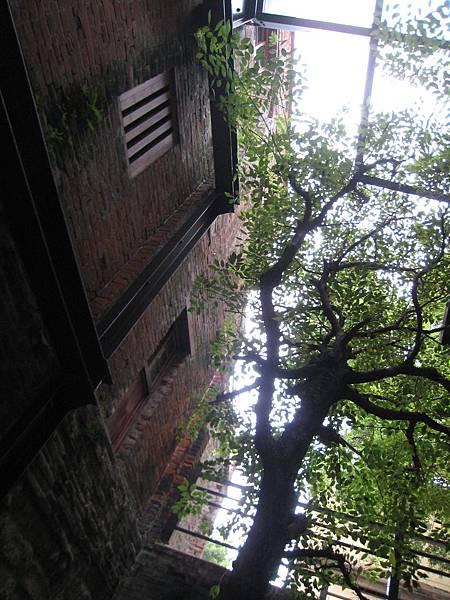 樹與建築的剪影