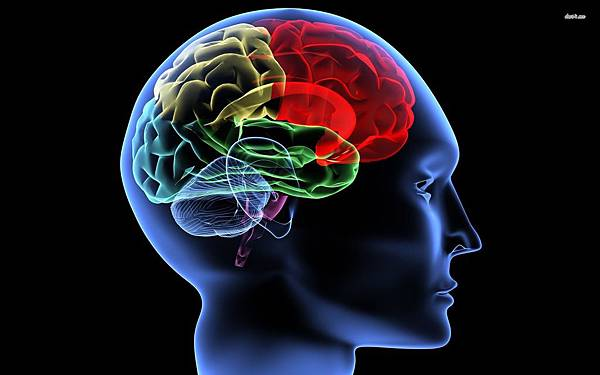 16152-human-brain-1920x1200-digital-art-wallpaper