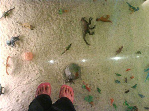 這是特殊製的玻璃 下面是我挑過的小恐龍小玩具