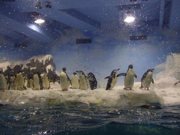 這些企鵝真是可愛