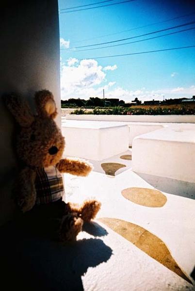 兔子也怕曬‧躲在陰影乘涼