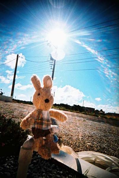 兔子在國境之南