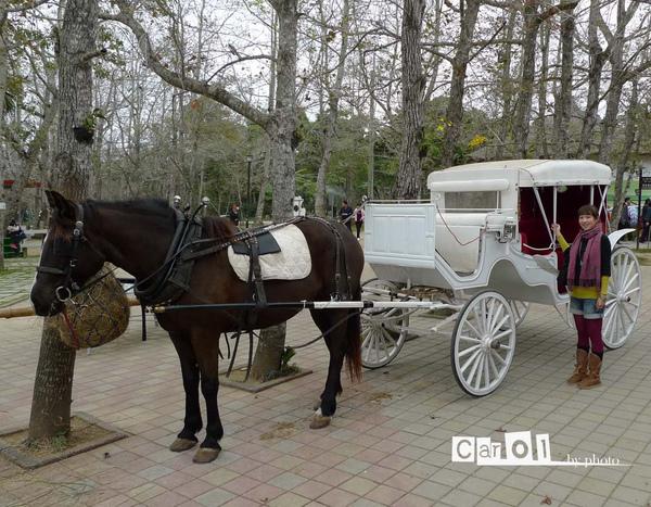 漂亮的馬車