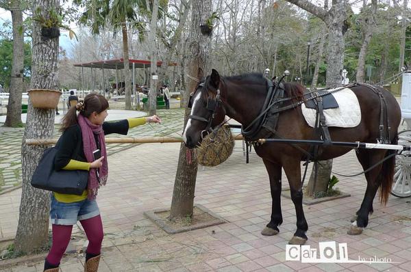 餵馬吃草 我不知道在驚險什麼?