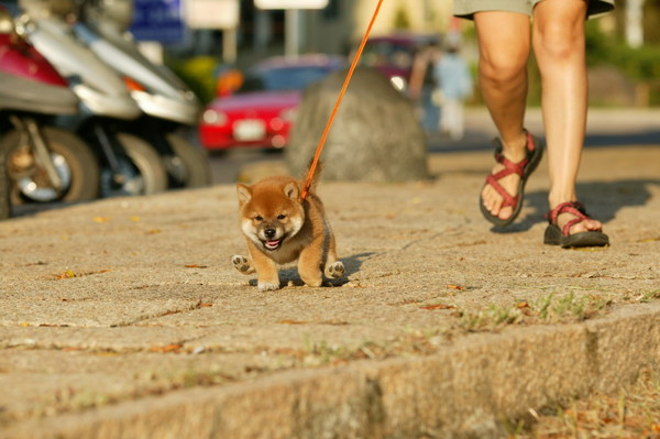 第一次到戶外散步,還不太習慣