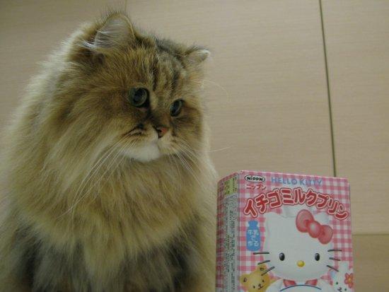 Kitty布丁-3.jpg