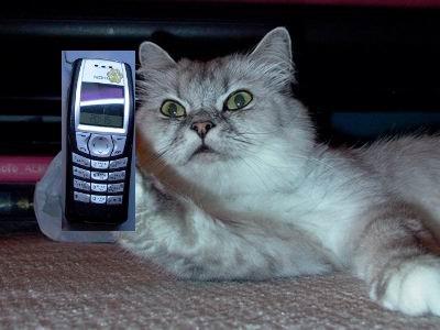 嘿講-11講電話