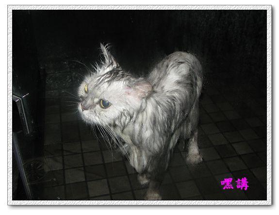 1Y2M14D嘿講洗澡-01