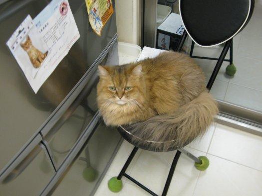 小歐in廚房-1.jpg