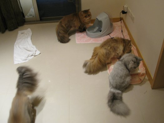 四貓合照.jpg