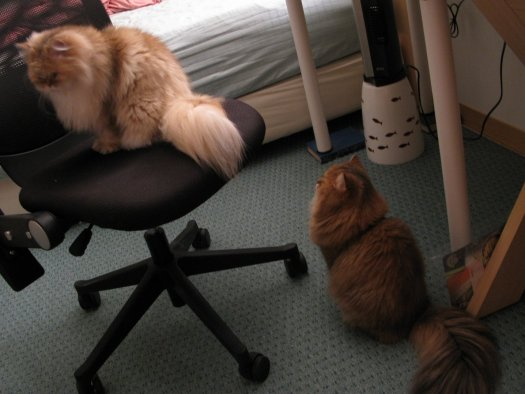 貓生活-06小歐找姊姊.jpg