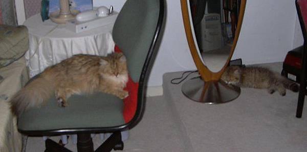 兩貓睡覺-02.jpg