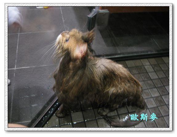 1Y2M02D小麥洗澡-04.jpg