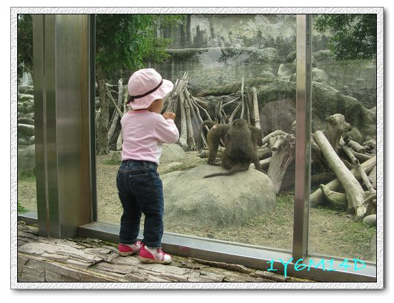 1Y6M14D-09 動物園.jpg