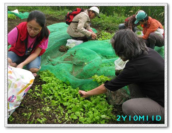 2Y10M11D-小農夫38