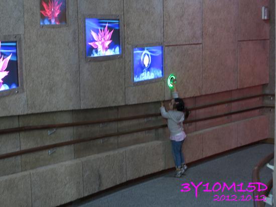 3Y10M15D-花博-11