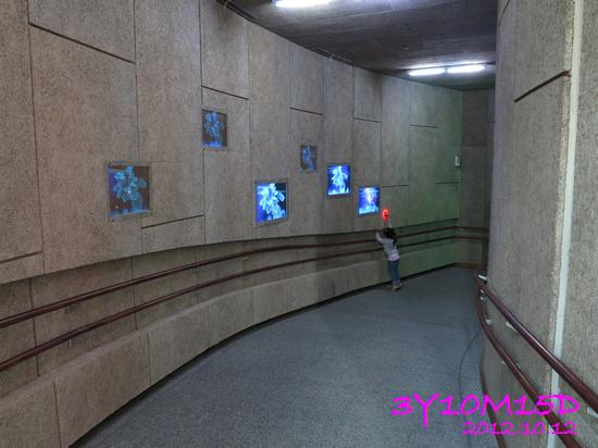 3Y10M15D-花博-14