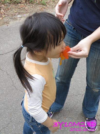 3Y10M23D-1採柿子-02
