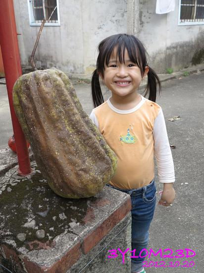 3Y10M23D-1採柿子-06