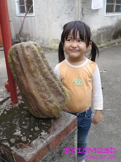 3Y10M23D-1採柿子-07