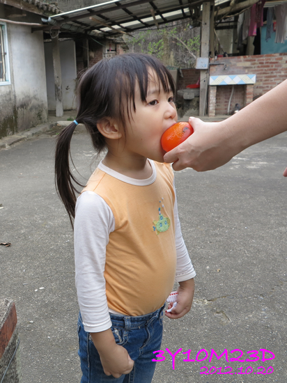 3Y10M23D-1採柿子-08